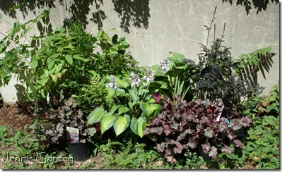 Collection of plants for the new serenity garden (photo credit: Jean Potuchek)