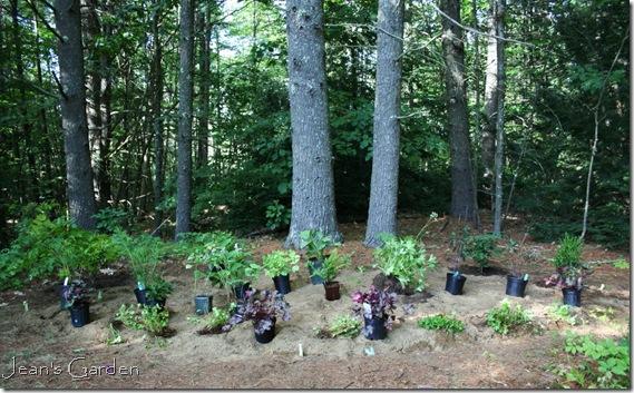 Plants spotted in serenity garden before planting (photo credit: Jean Potuchek)