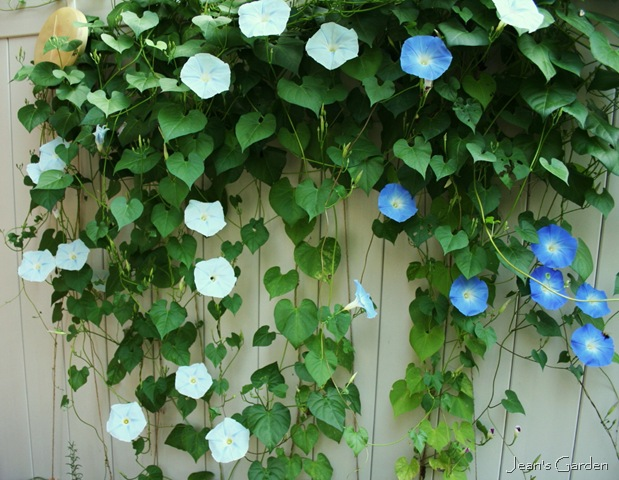 how to make a pot plant growing fence