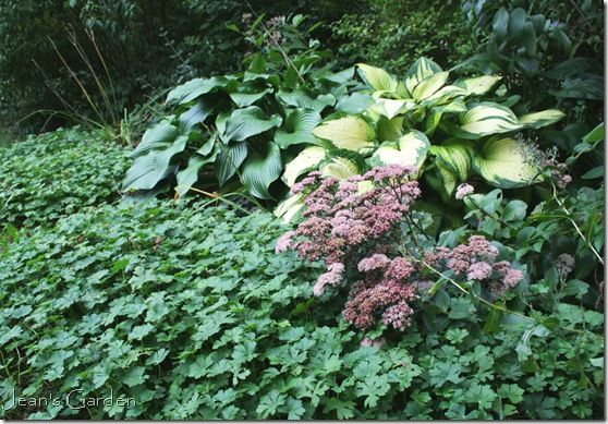 Sedum and hosta in my Gettysburg garden in September (photo credit: Jean Potuchek)