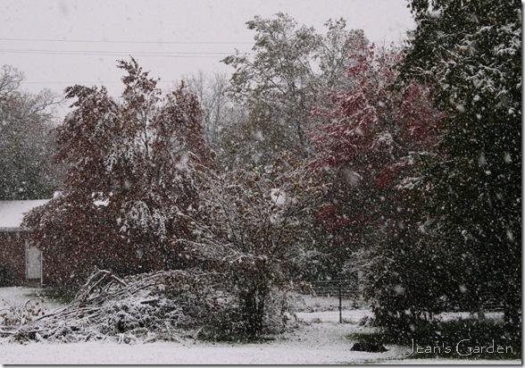 Fall foliage in snow, Gettysburg PA, Oct. 29 2011 (photo credit: Jean Potuchek)