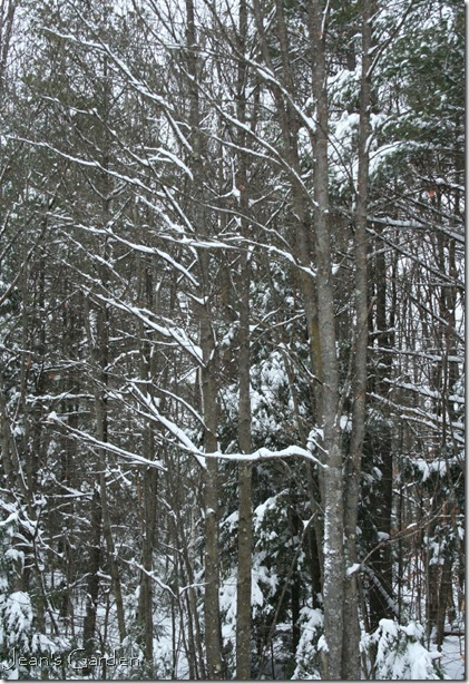 Winter woods on a snowy day (photo credit: Jean Potuchek)