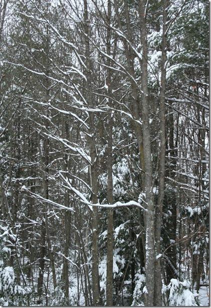 Winter woods on a snowy day (photo credit: Jean Potuchek)