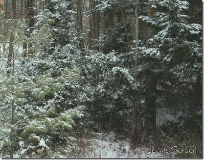 Snow-dusted woods (photo credit: Jean Potuchek)