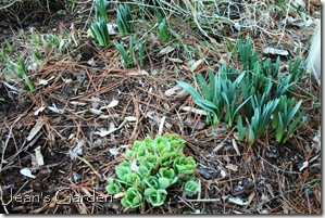 New green growth visible afer clean-up in my Gettysburg garden (photo credit: Jean Potuchek)