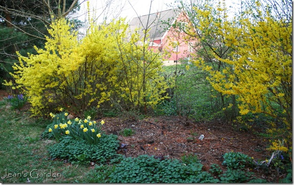 Spring display in my Gettysburg garden (photo credit: Jean Potuchek)