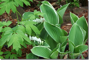 White bleeding heart and hosta (photo credit: Jean Potuchek)