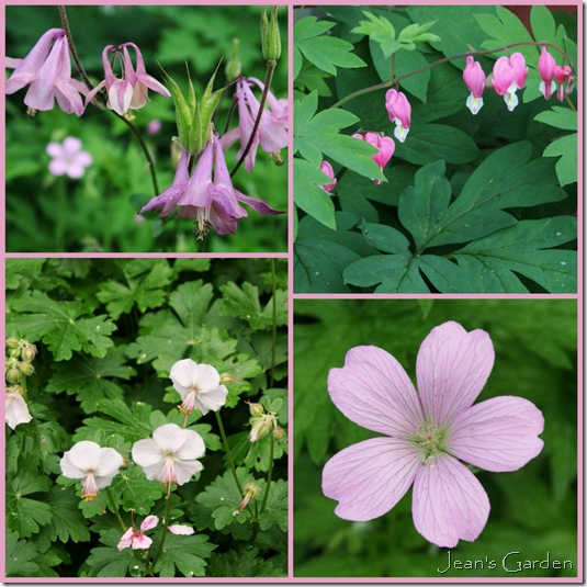Clockwise from top left: Columbine, Bleeding Hearts, Geranium 'A.T. Johnson,' Geranium 'Biokovo' (photo credits: Jean Potuchek)