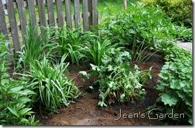 Tradescantia and geranium in new locations (photo credit: Jean Potuchek)