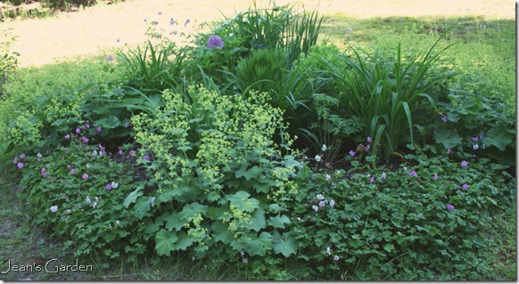 The circular bed in June (photo credit: Jean Potuchek)