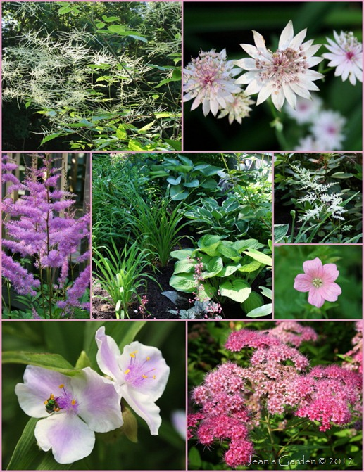 Deck Border blooms with foliage at center -- clockwise from upper left: goatsbeard, astrantia Roma, Astilbe 'Bridal Veil,' Geranium x oxnianum, spirea blooms, Tradescantia 'Pink Chablis,' Astilbe 'Cattleya' (photo credits: Jean Potuchek)