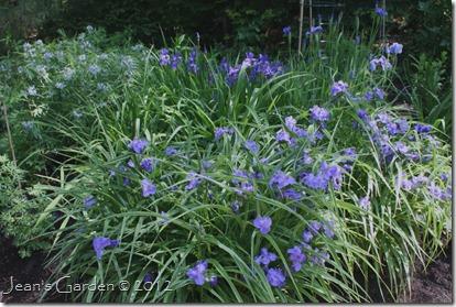 garden blues2