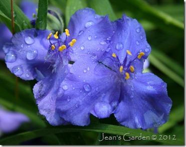 zwanenburg blue 2011