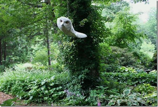 primozich owl