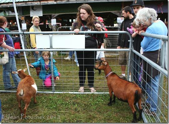 mofga goats