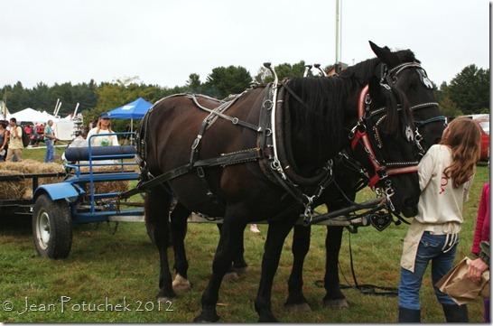 mofga horses