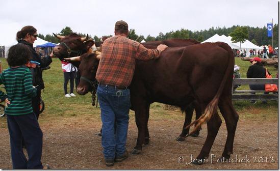mofga oxen