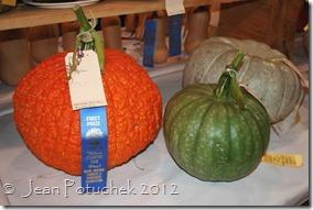 mofga pumpkins