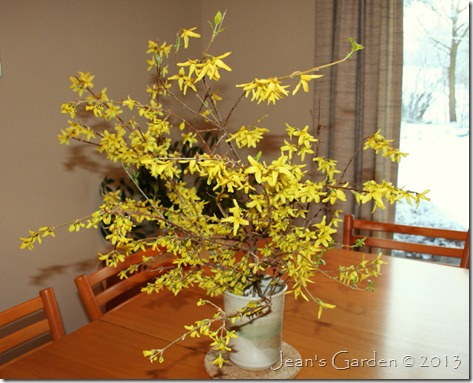 february forsythia