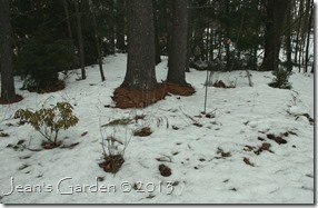 Light snow cover in the Serenity Garden, March 11 2013 (photo credit: Jean Potuchek)