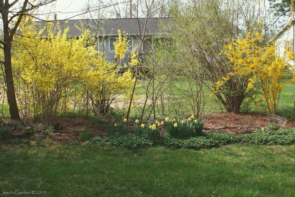 sweet pennsylvania spring gbbd april 2013 jean s garden rh jeansgarden wordpress com garden route in april butchart garden in april