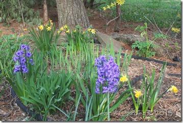 gburg stone circle april