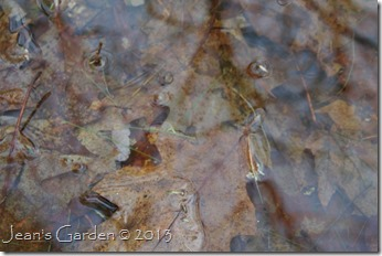 vernal pool breeding signs