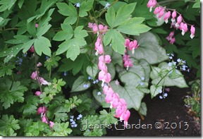 gburg bleeding hearts & brunnera