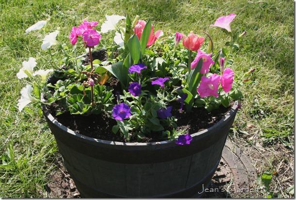 tulips & annuals