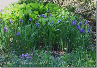 back slope irises