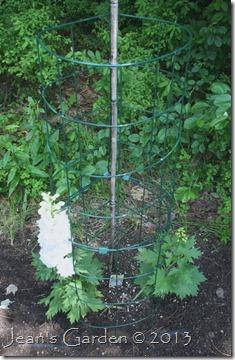 garden grid cage