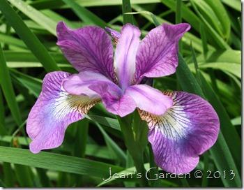 lavender bounty_1