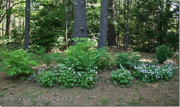 serenity garden june 2013