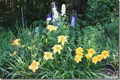 daylilies & delphinium