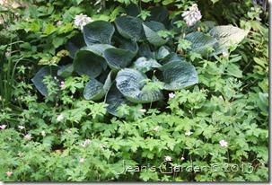 love pat & geranium