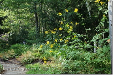 august back garden