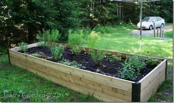 raised bed planted
