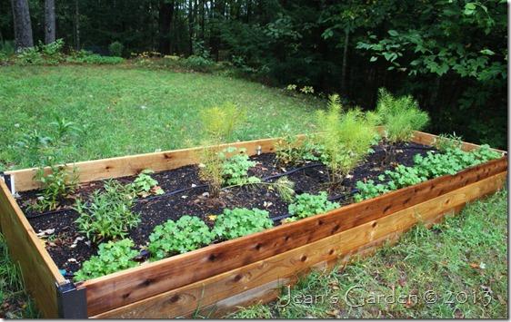 raised bed plants