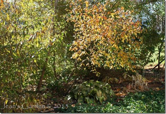 back flower bed November