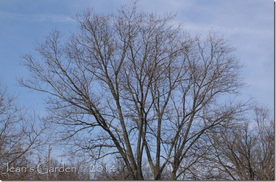 trees budding