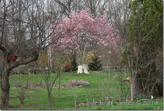 neighborhood pink magnolia