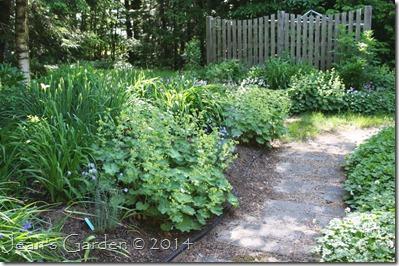 back garden june 2014