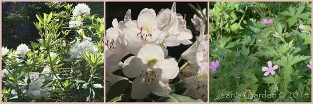 deck june blooms