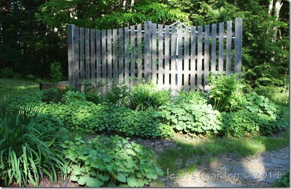 fence border foliage