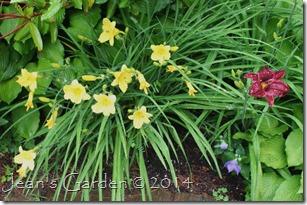 back slope blooms