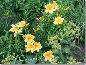 b&y daylilies