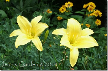 yellow pinwheel 2014