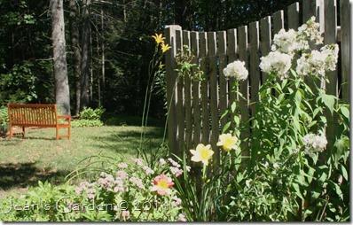 fall fence border daylilies