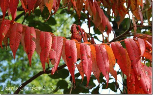 fall foliage detail2