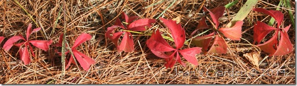 fall foliage detail